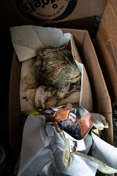 Birds stuffed in a box, ironically juxtaposed with an image of devotion....these birds hadn't been slaughtered in the usual way.  They had died from exposure and neglect, left in the pile of garbage sitting on the street.