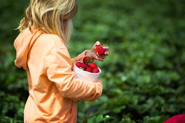 Carlsbad Strawberry Fields