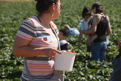 Strawberry-pickin-2014-044