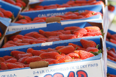 Strawberry-pickin-2014-009