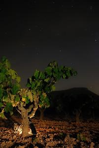 Òdena (Barcelona) Una noche por las viñas...