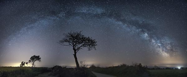 L'arbre cosmique