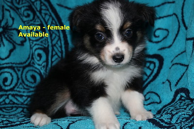 Amaya has been reserved as of 7/8/18