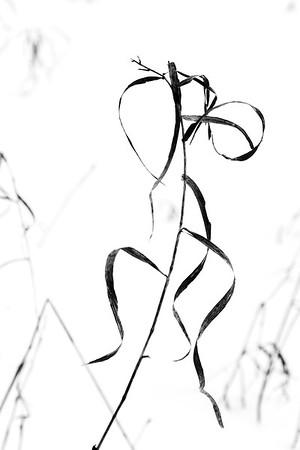 Herbage dans la neige