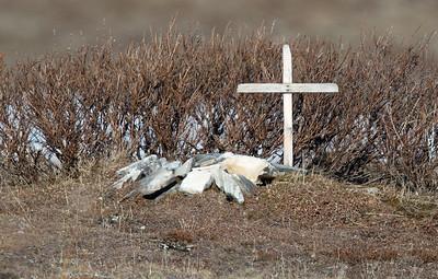 Cemetery, Nome, Alaska