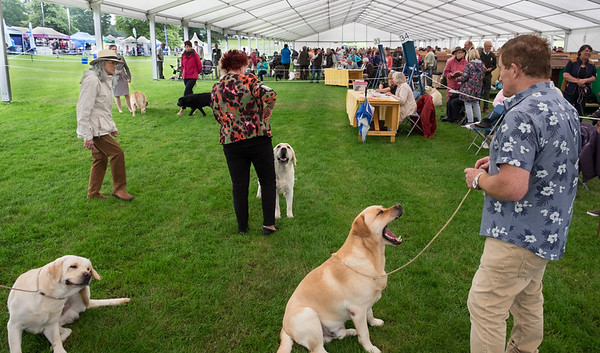 Scratch Stare and Yawn - Judging at Harewood Dog Show West Yorkshire 2017