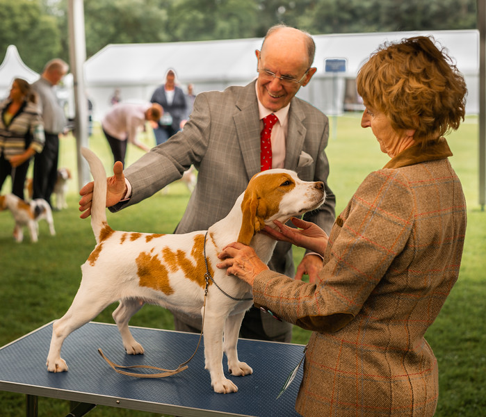 Winner - Harewood Dog Show North Yorkshire UK 2017
