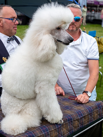 Dog Show - Harewood House West Yorkshire UK 2016