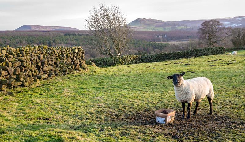 Landscape from Nr Hall Lane Snilesworth - North Yorkshire Moors UK 2017
