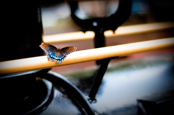 This butterfly was amazing...I chased it for a good five minutes before I finally got a shot....