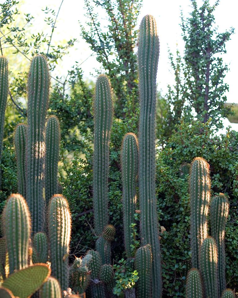 _MG_2407a-Cactus