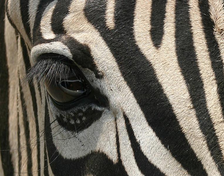 Zebra Natural Caverns Wildlife Park