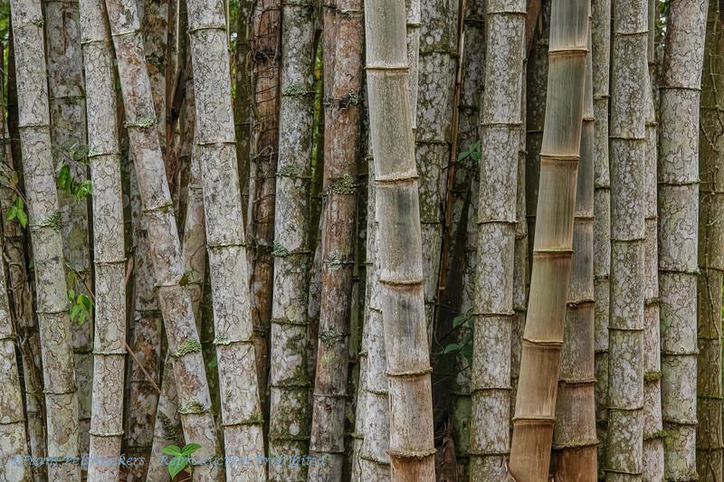 Bambou; Pantanal; 2019; Bambou Pantanal; Brazil