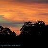 Sunset; Pantanal; 2019; Sunset Pantanal; Pantanal rivers; Brazil