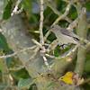 SouthAfrica; Sunbird