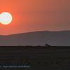 Namibië; Oryx gazella; Oryxantilopen; Spiesbok; Gemsbok; Namib Desert; Sunset