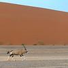 Namibië; Sossusvlei; Namibia; Red Dunes; NamibNaukluft National Park; Oryxantilopen; Oryx gazella; Oryx; Gemsbok; Spiesbok