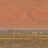 Namibië; Sossusvlei; Namibia; Red Dunes; NamibNaukluft National Park; Springbok