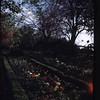 Ivy Hill Farm Gardens  (09773)