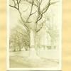 Lynch Law Tree (01566)