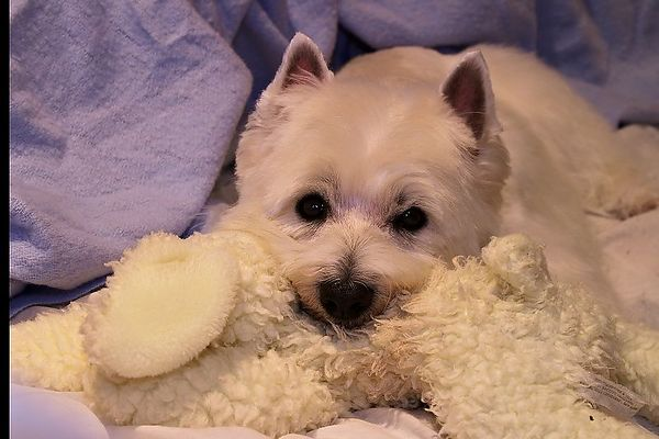 Clyde and his squeaky lamb