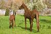 22nd Apr 12:  Wicker horses at Nunnington Hall