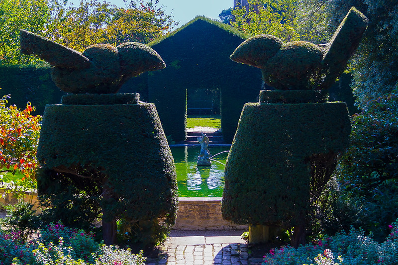 1st Oct 2015:  Bird Topiary over looking the Bathing Pool