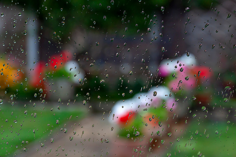 12th Aug 2018:  Garden through the lounge window