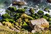 10th Sep 14:  Rocks at Portland Bill
