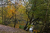 12th Nov 11:  South Hill Park south lake