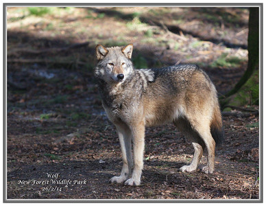 New Forest Wildlife Park  - 26/2/14