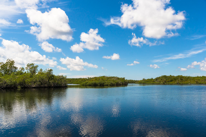 Mangrove Wilderness - Everglades, FL - USA