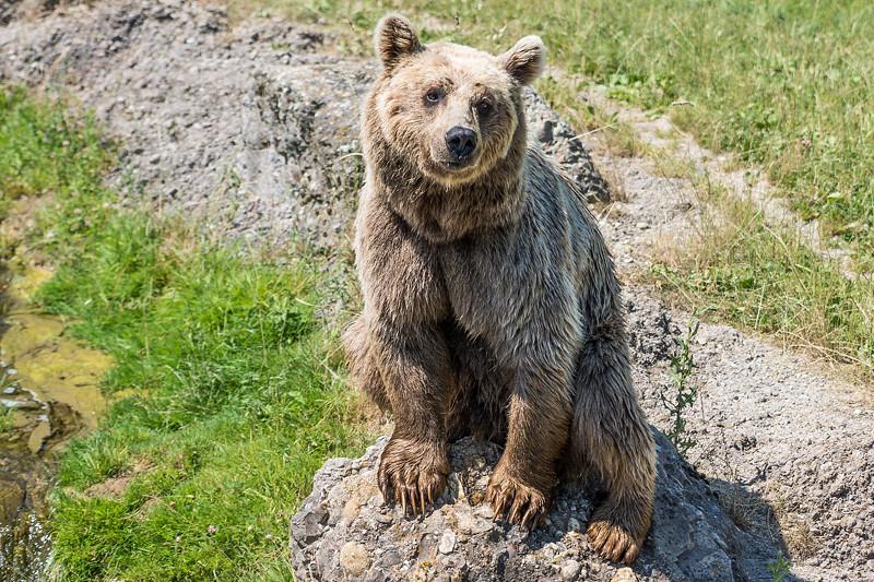 Tierpark Goldau 2016