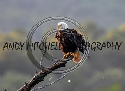 Eagle3