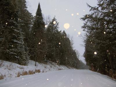 North Woods in Winter