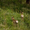 Little Baby Deer Things