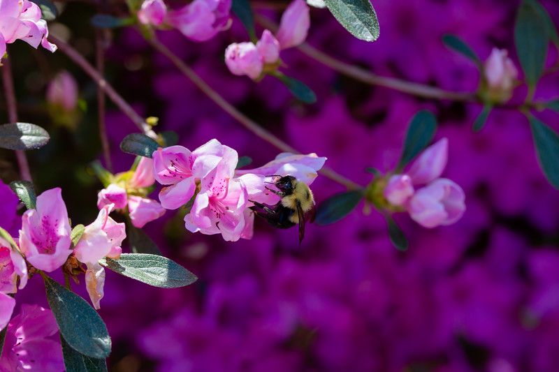 Bee Friends!