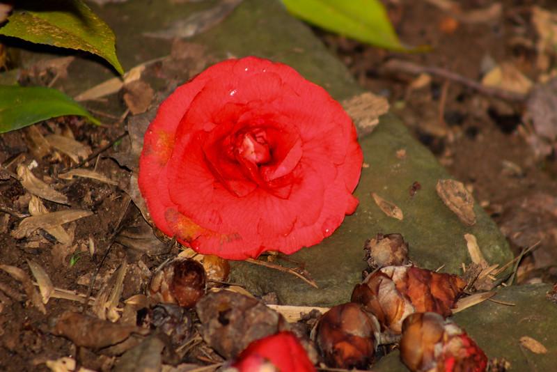 Flower Close up- Miscellaneous