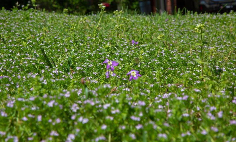 Grass Bloom