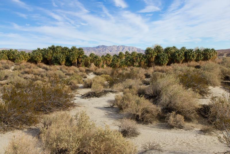 Coachella Valley Preserve, near Palm Springs, California