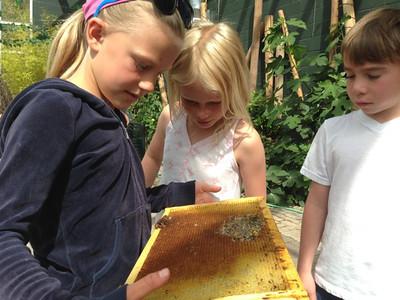 Beekeeping at the Botanical Garden