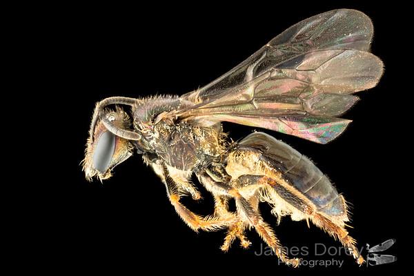 New Monasvau species