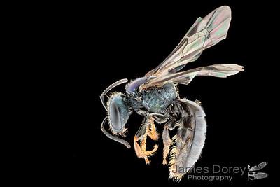 Hadrandar Clade Female