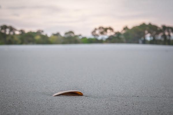 Beach Shell 3