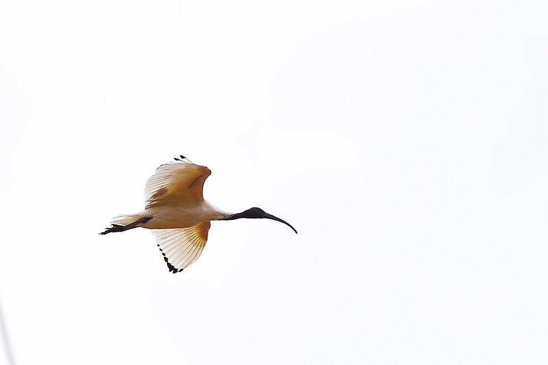 Birds above