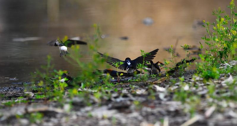 Birds at Bridge