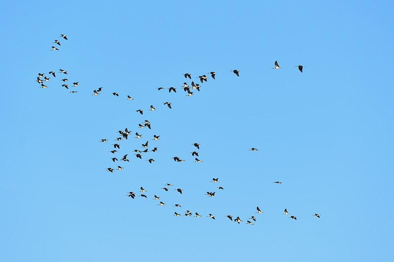 Birds over Loxton North football Oval