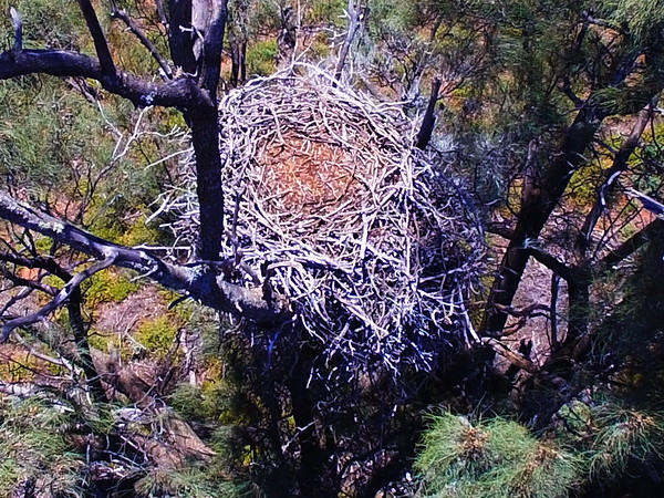 Eagles nest and mallee fowl nest