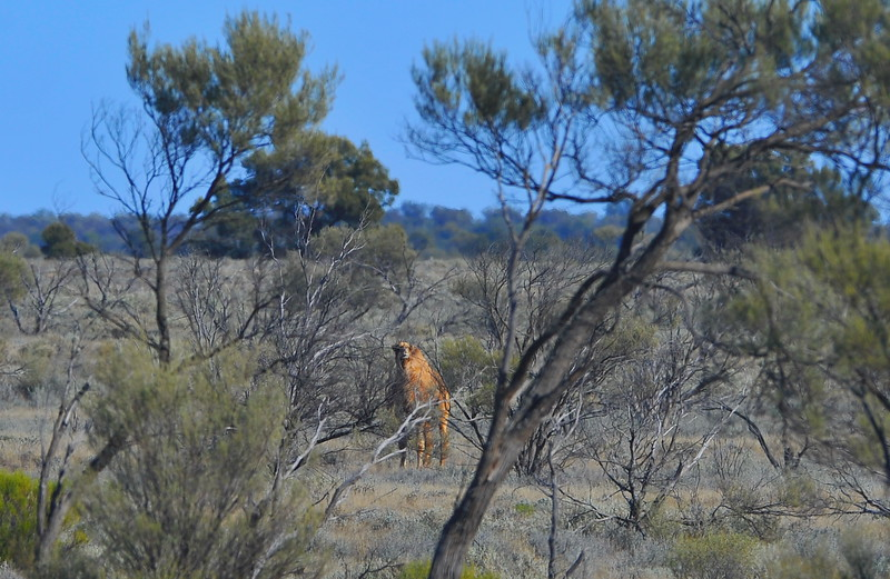 Epic Adventure # 9 Maralinga, whales and dirt tracks (with Virgo, Brooke & Buzz)