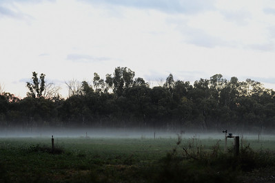 early evening fog forming over paddock